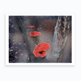 Red Mushrooms Art Print