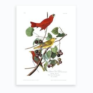 Summer Red Bird Art Print