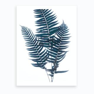 Fern Iv  Art Print