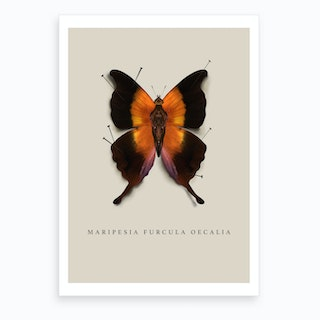 Butterfly No4 Art Print