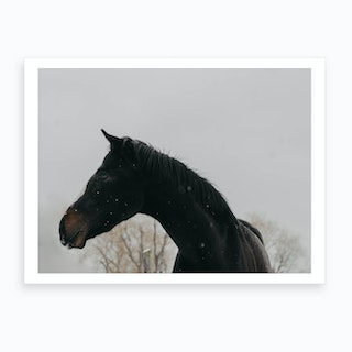 Horse And Snow Art Print