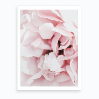 Dusty Rose II Art Print