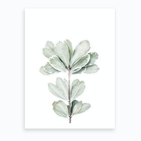 Botanical II Art Print