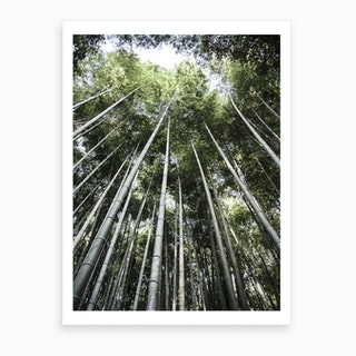 Bamboo Forest Ii Art Print