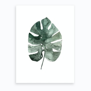 Botanical Illustration Monstera Leaf Art Print