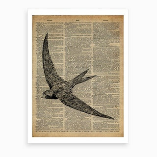 Swallow Bird Art Print