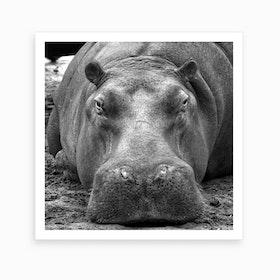 Hippo Square Art Print