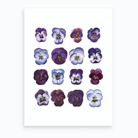 A Study Of Violas Art Print