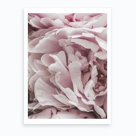Powder Pink II Art Print