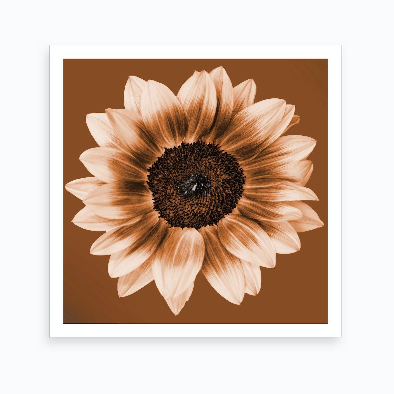 Rustic Sunflower Square Art Print