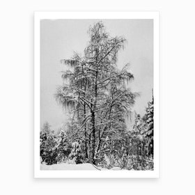 Frozen Tree Art Print