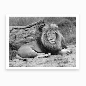 Lion Male III Art Print