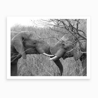 Playing Elephants Art Print