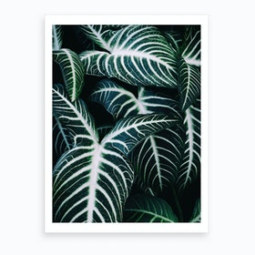 Jungle2 Art Print