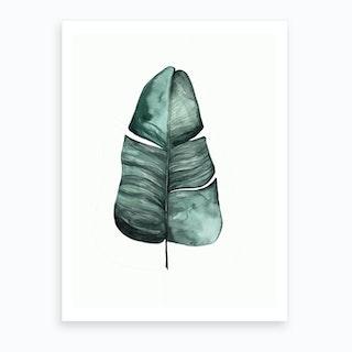 Botanical Illustration Banana Leaf Art Print