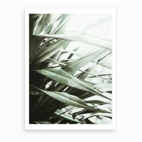 Phormium I Art Print