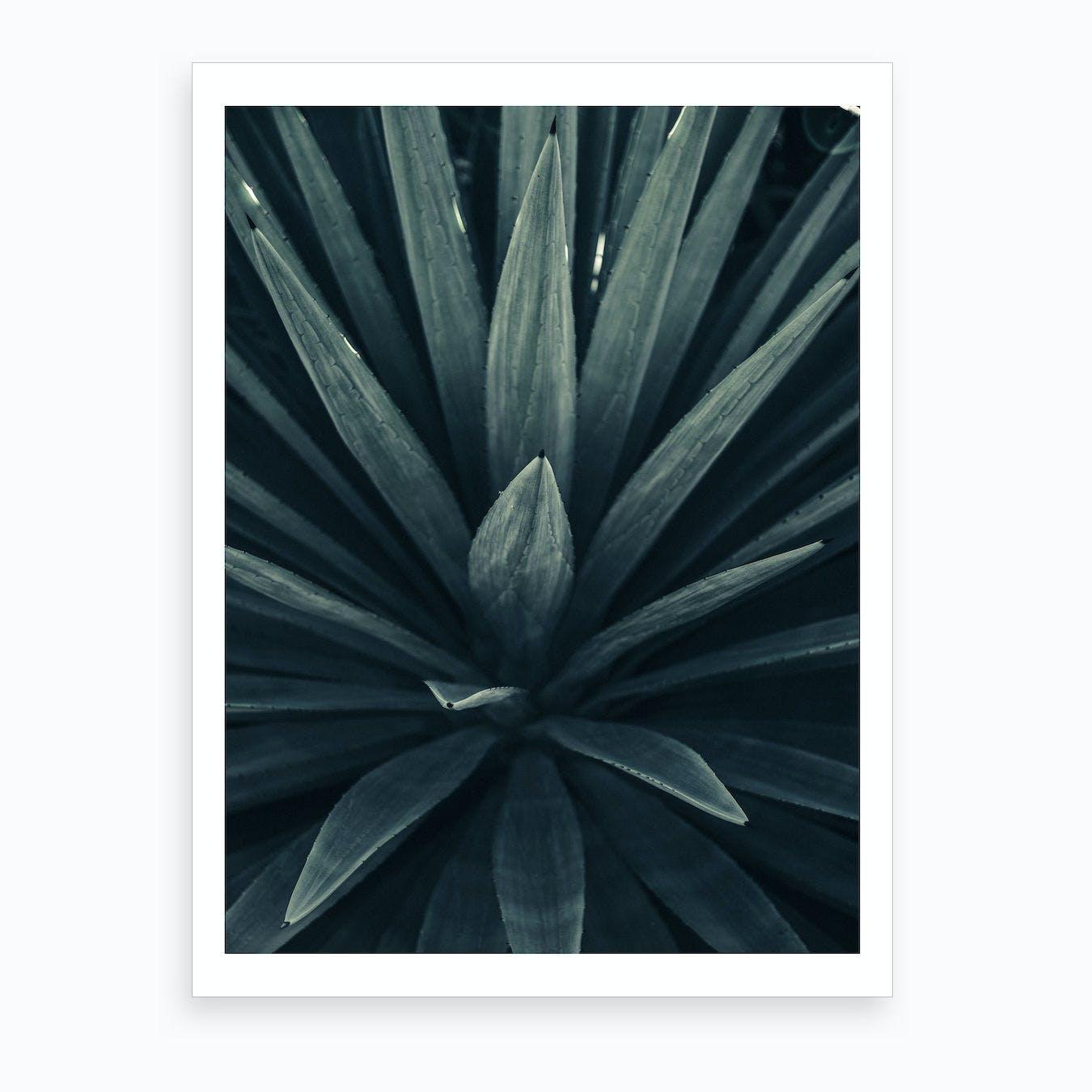 Palm Shade Ix Art Print