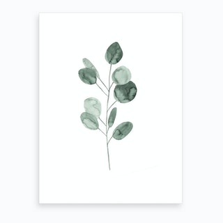 Botanical Illustration Eukalyptus2 Art Print