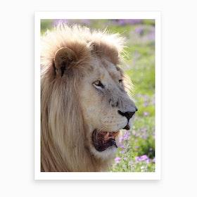 White Lion Male Art Print