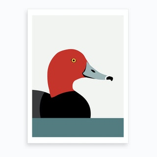 Redhead Duck Art Print