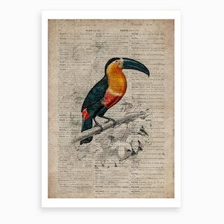 Toucan Dictionnaire Universel D Histoire Naturelle Art Print