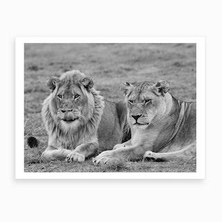 Lion Couple Art Print
