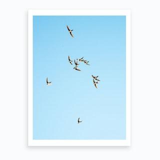 Mediterranean Swifts Art Print
