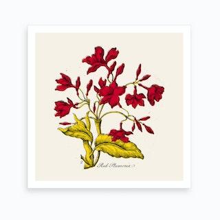 Red Plumeria Art Print
