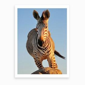 Zebra Action Color Art Print