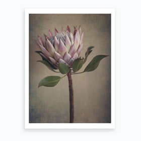 Protea Still Art Print