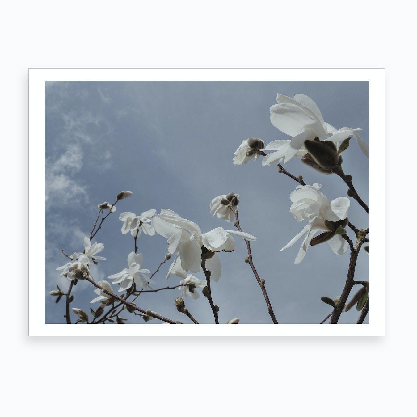 Wind Magnolias Art Print