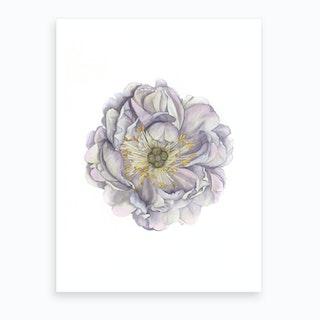 A Peony In Grey Art Print