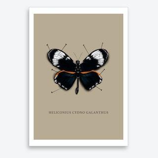Butterfly No2 Art Print