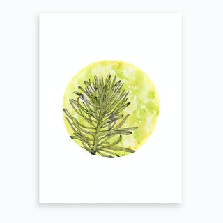 Euphorbia On Green And Yellow Art Print