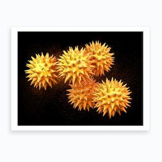 Pollen Grains Asteraceae 03 Art Print