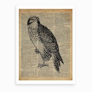 Hawk Bird Art Print