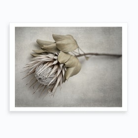Everlasting 5 Art Print