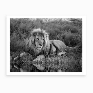 Lion At The River Art Print
