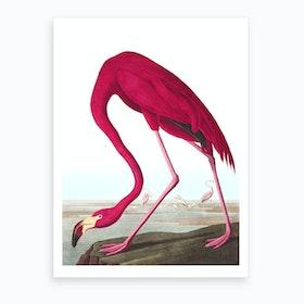 American Flamingo II Art Print