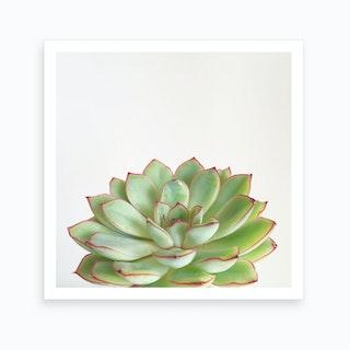Pink And Green Succulent Art Print