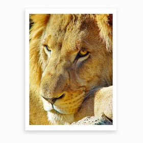 Lion Face Art Print