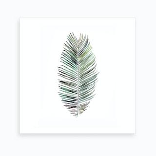 Botanical Illustration   Cocos Nucifera Art Print