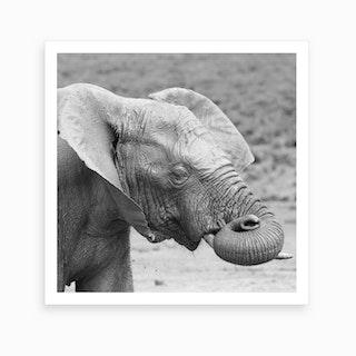 Dreaming Elephant Art Print