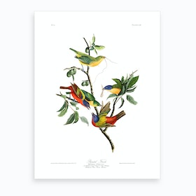 Painted Finch Art Print