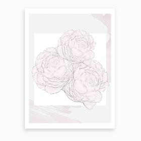 Peonies In Bloom 2 Art Print