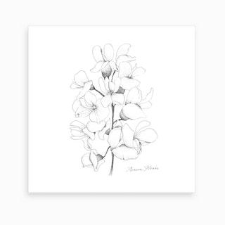 Acacia Flower 2 Art Print