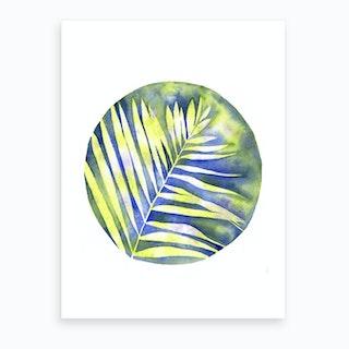 Fern Shadows Art Print