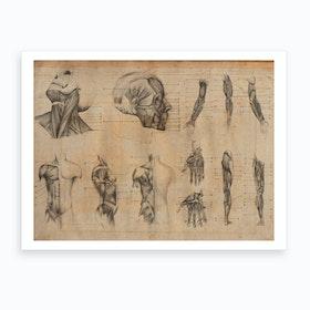 Vintage Anatomy General Art Print