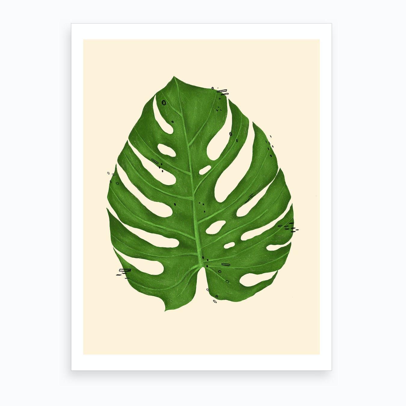 Monstera Deliciosa Leaf Art Print By Cecily Goff Fy