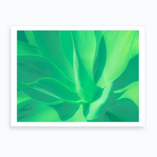 Aloe Vera Cactus Art Print